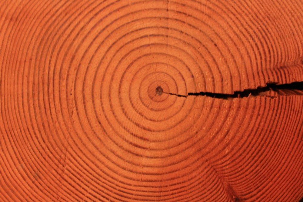 Bien connu A quoi ça sert, le bois ? | ECHOSCIENCES - Normandie IL46